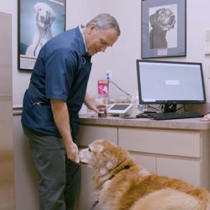 dr. elmer canine wellness exam